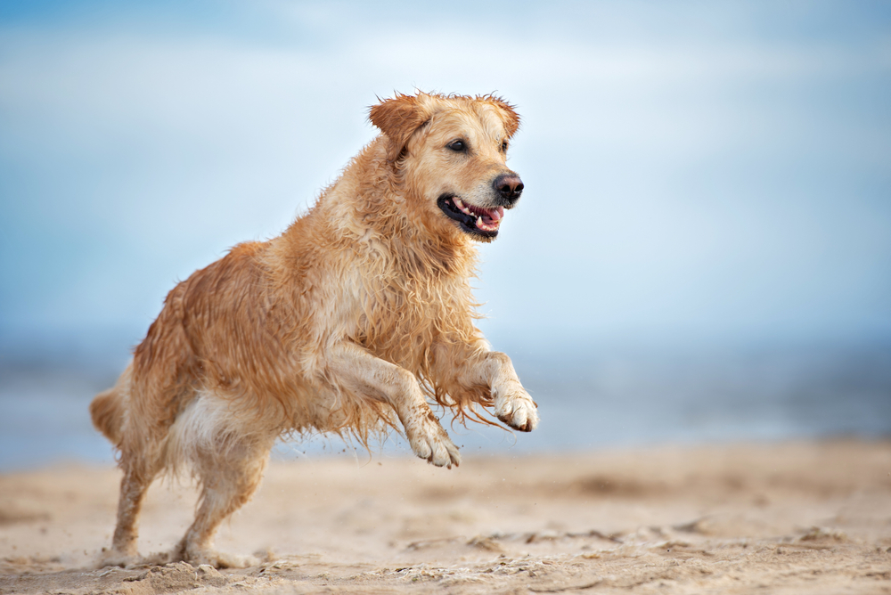 Biomega Presents Salmon Peptides As Driver For Pet Health In Latest PetFair SE Asia Webinar
